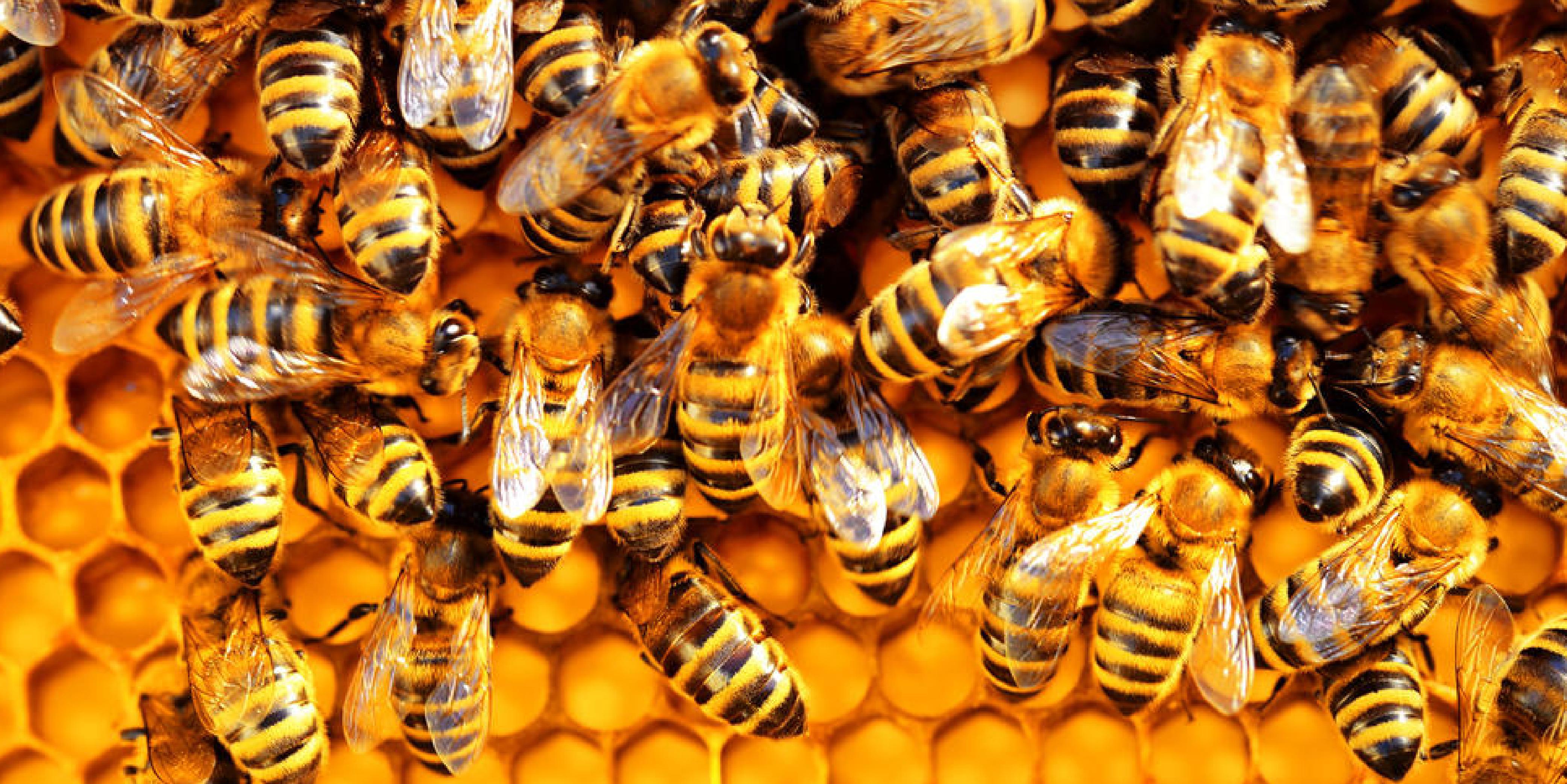 Bee Hotel & Bee Bath